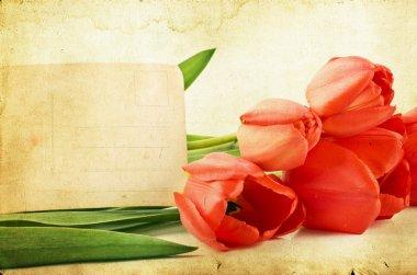 Vintage tulips