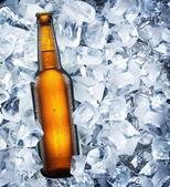 Flasche Bier liegt im Eis