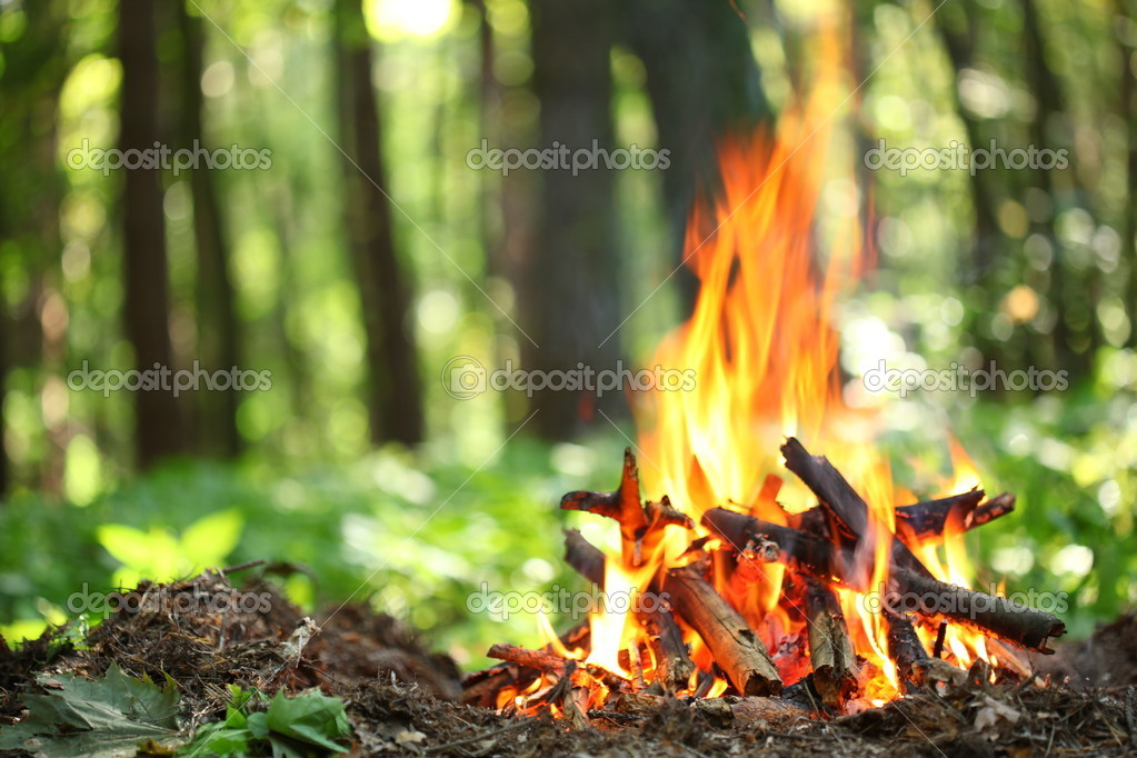 Bonfire in the forest.
