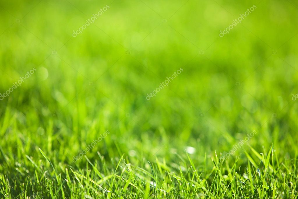 Green luscious grass.