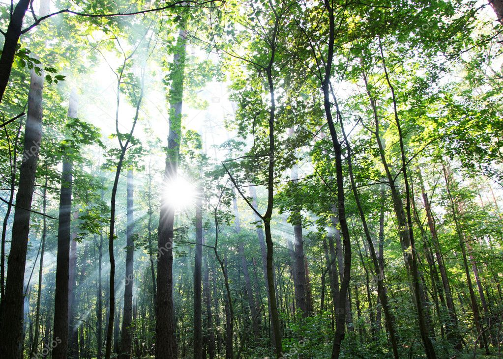 Фотообои Солнечный лес.