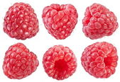 sbírka zralé červené maliny
