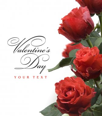 Art Valentine day greeting card with red roses isolated on white background
