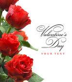 Fényképek Art üdvözlés kártya-val piros rózsák elszigetelt fehér background