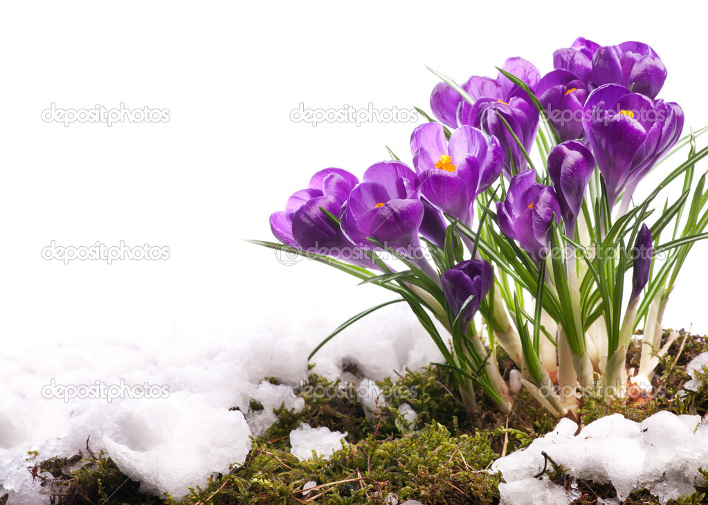 Art Beautiful easter Spring Flowers isolated on white background