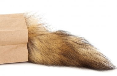 Hairy tail in paper bag