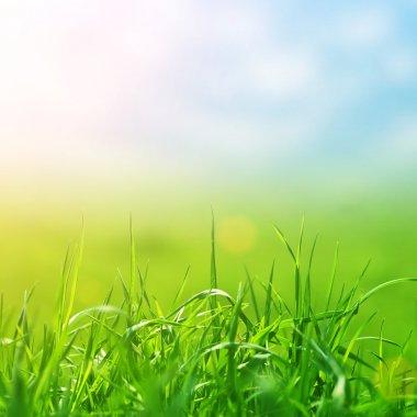 Spring grass in sun light and defocused sky
