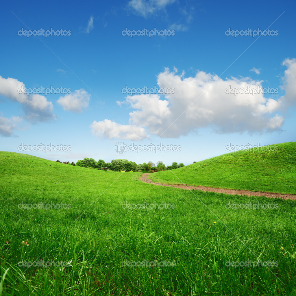 Grassy green hills and lane to remote trees
