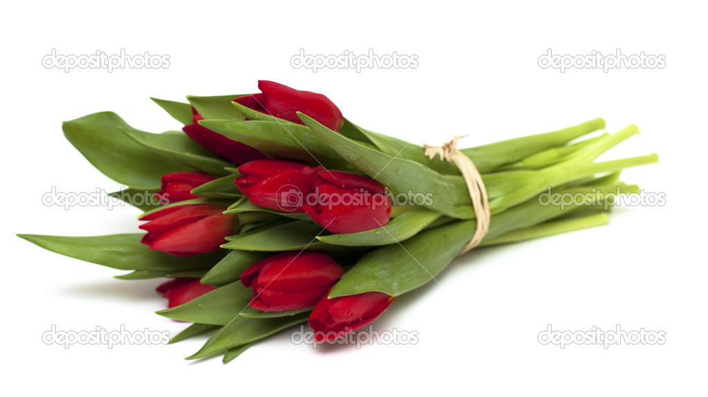 Tied red tulips