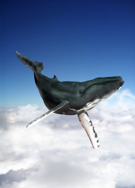 Blue whale swimming in the sky.
