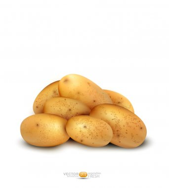 Potato tubers vector isolated on a white background