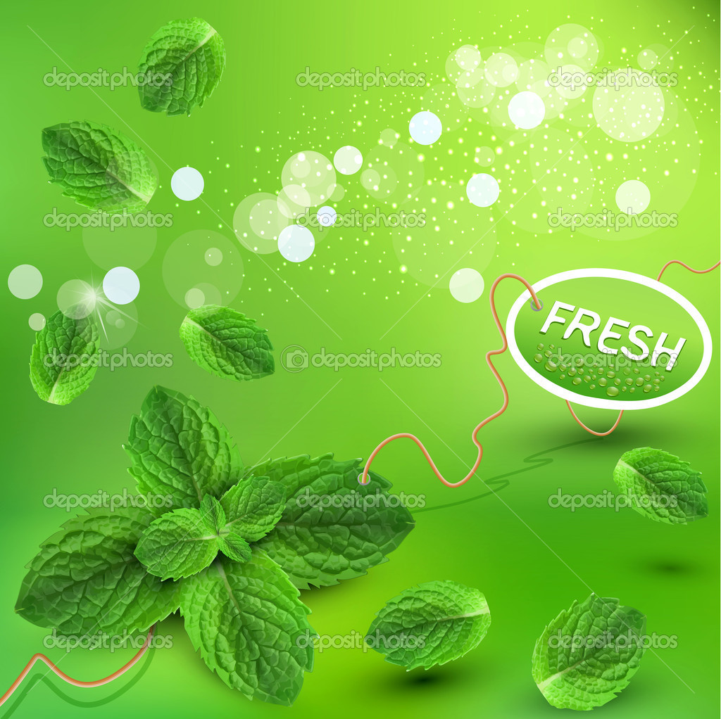 Vector green background with fresh mint leaves