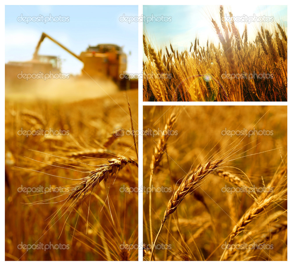 Grain collage