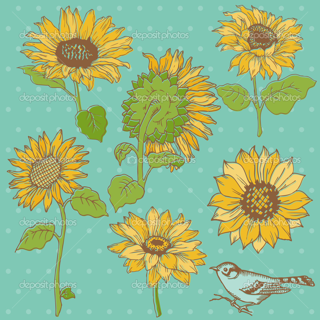 Flower Set: Detailed Hand Drawn Sunflowers in vector