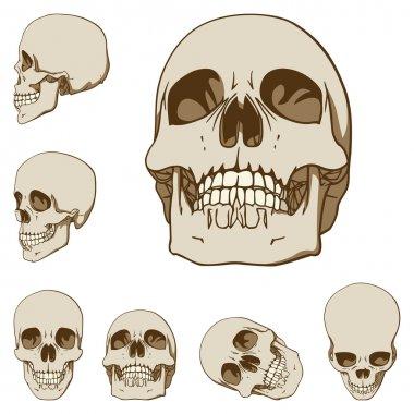 Six skulls set