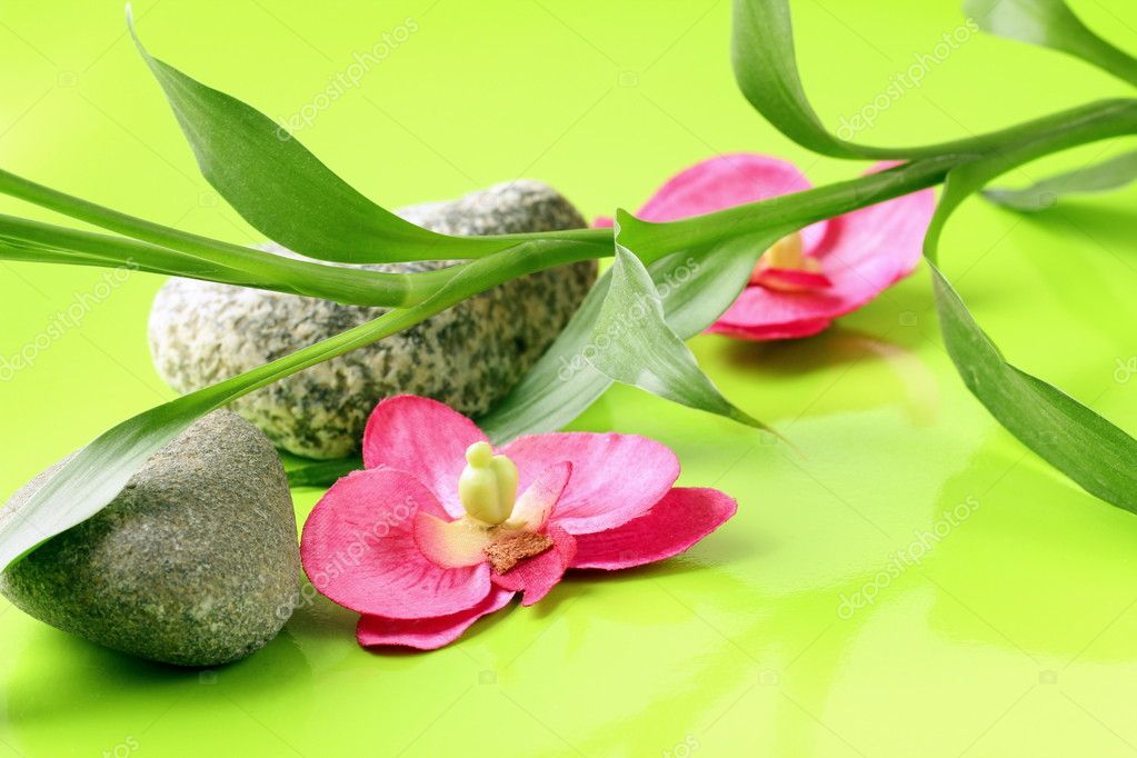 Branch of bamboo, stones and orchids on a green background, spa concept