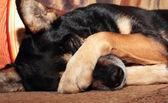 Fotografie Hund Abdeckung Nase