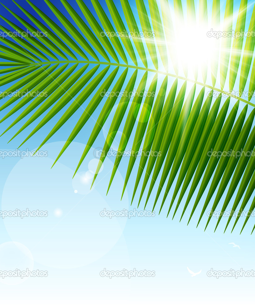 Palm leaf on blue sky and sun beams