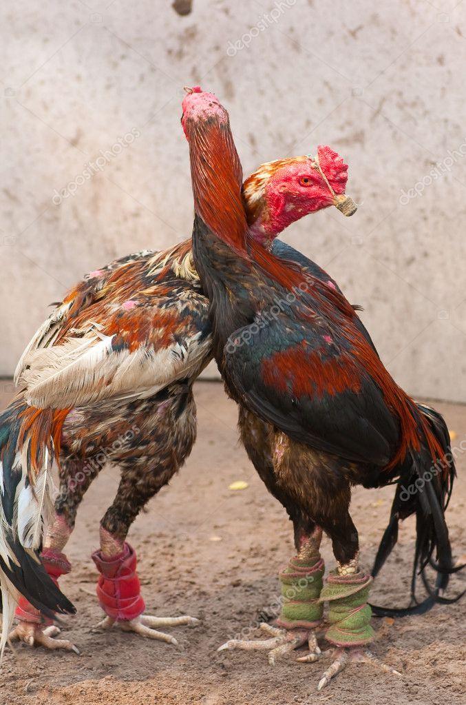 Pair Of Vintage Brass Fighting Cocks