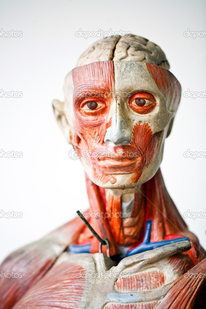 Grunge human anatomy — Stock Photo © zippar #9135420