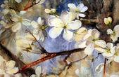Fotografie Frühlingsblumen