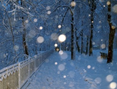 Alley in a park covered with snow and couple in walking in winter park in s