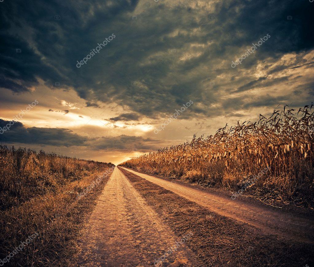Corn field road
