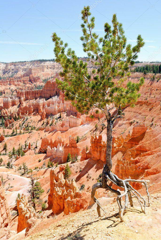 Adaptability of growing tree