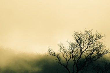 Tree branch and foggy morning
