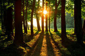 Fotografie Forest