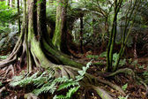 Fotografie Jungle
