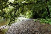 Fotografie tropický prales