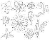 Fotografie Contour flowers