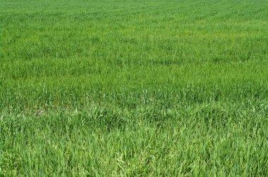 Green grass background texture. stock vector