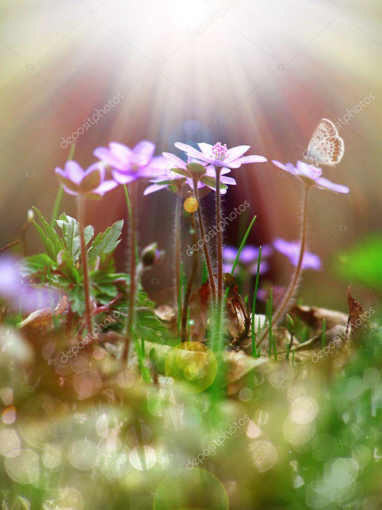 Tiny purple flowers under the sunlight