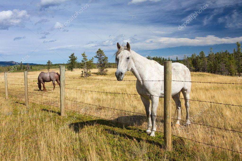 Сосет через забор на ферме фото 279-905