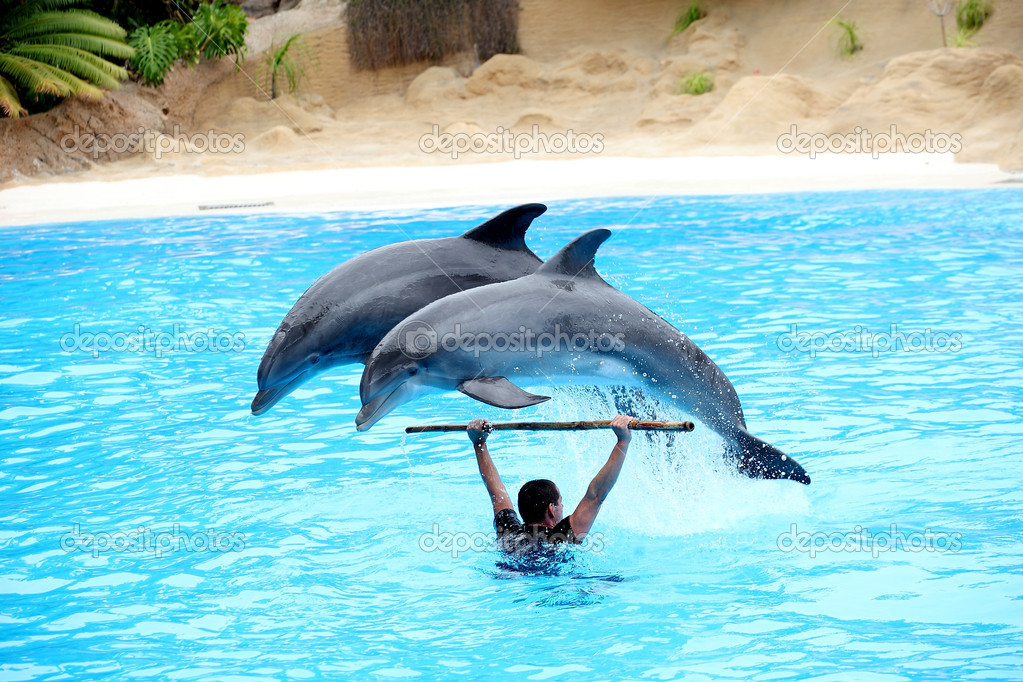 Two dolphins jumping over instructor