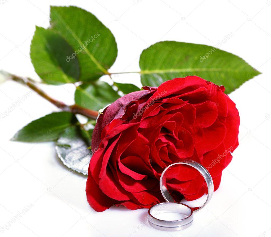 rote rose und zwei trauringe stockfoto boyan1971 9287128. Black Bedroom Furniture Sets. Home Design Ideas