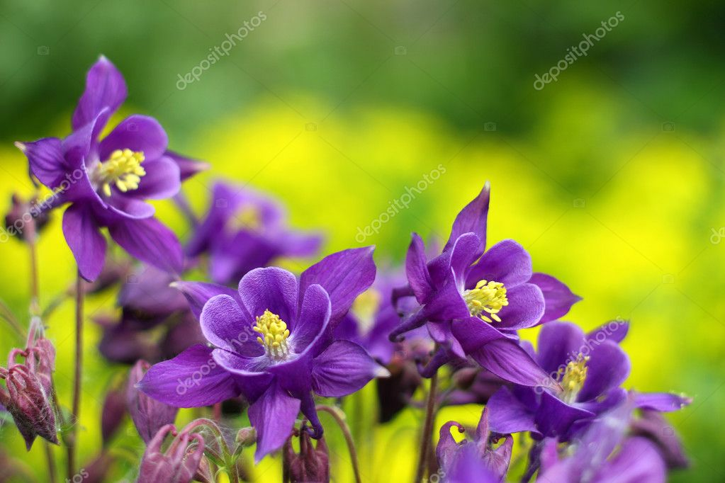 Purple flowers at green background