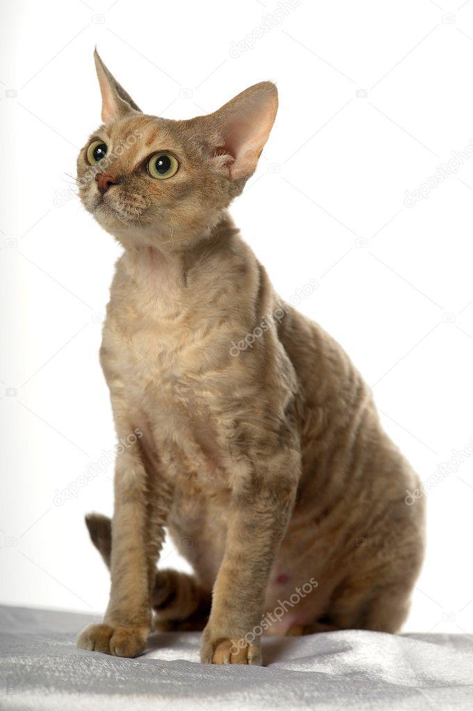 Μάχη γάτες σε απευθείας σύνδεση dating