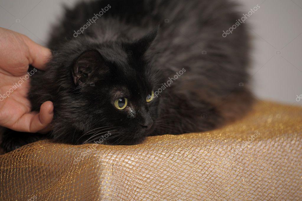 Černá kočička pic.com