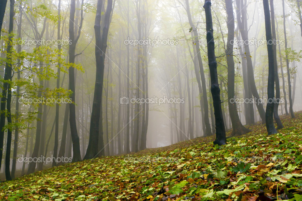 Fallen leaves in autumn forest and mysterious fog.