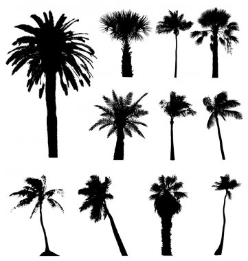 Collection of vector palm trees silhouettes. Easy to edit, any s