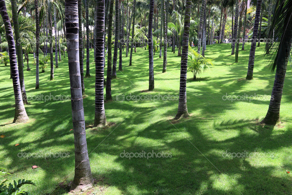 Beautiful park with palm trees on Tenerife, Canary Islands.
