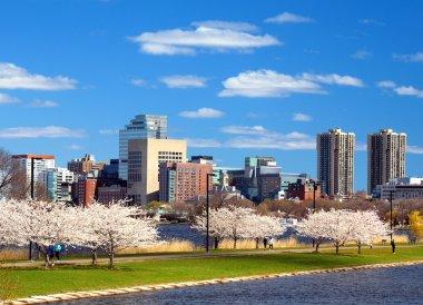 Boston Skyline in Spring