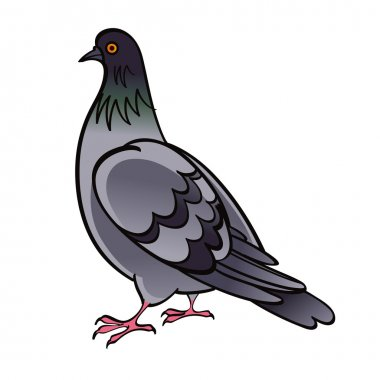 Pigeon Dove bird fauna