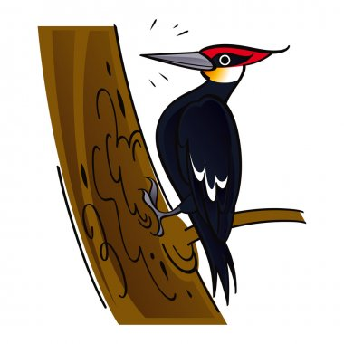 Woodpecker wood forest tree bird fauna