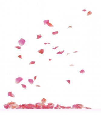 Falling rose petals. Isolated on white background. stock vector