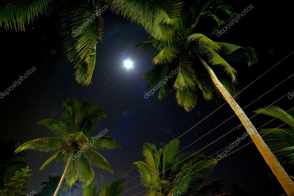 mooie palmbomen die worden verlicht door de maan — Stockfoto ...