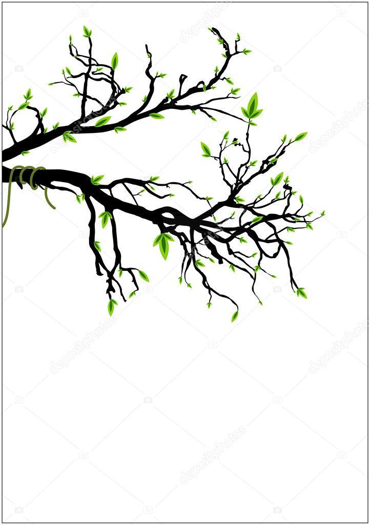 vert feuilles sur une branche d 39 arbre mort image vectorielle baavli 8205195. Black Bedroom Furniture Sets. Home Design Ideas